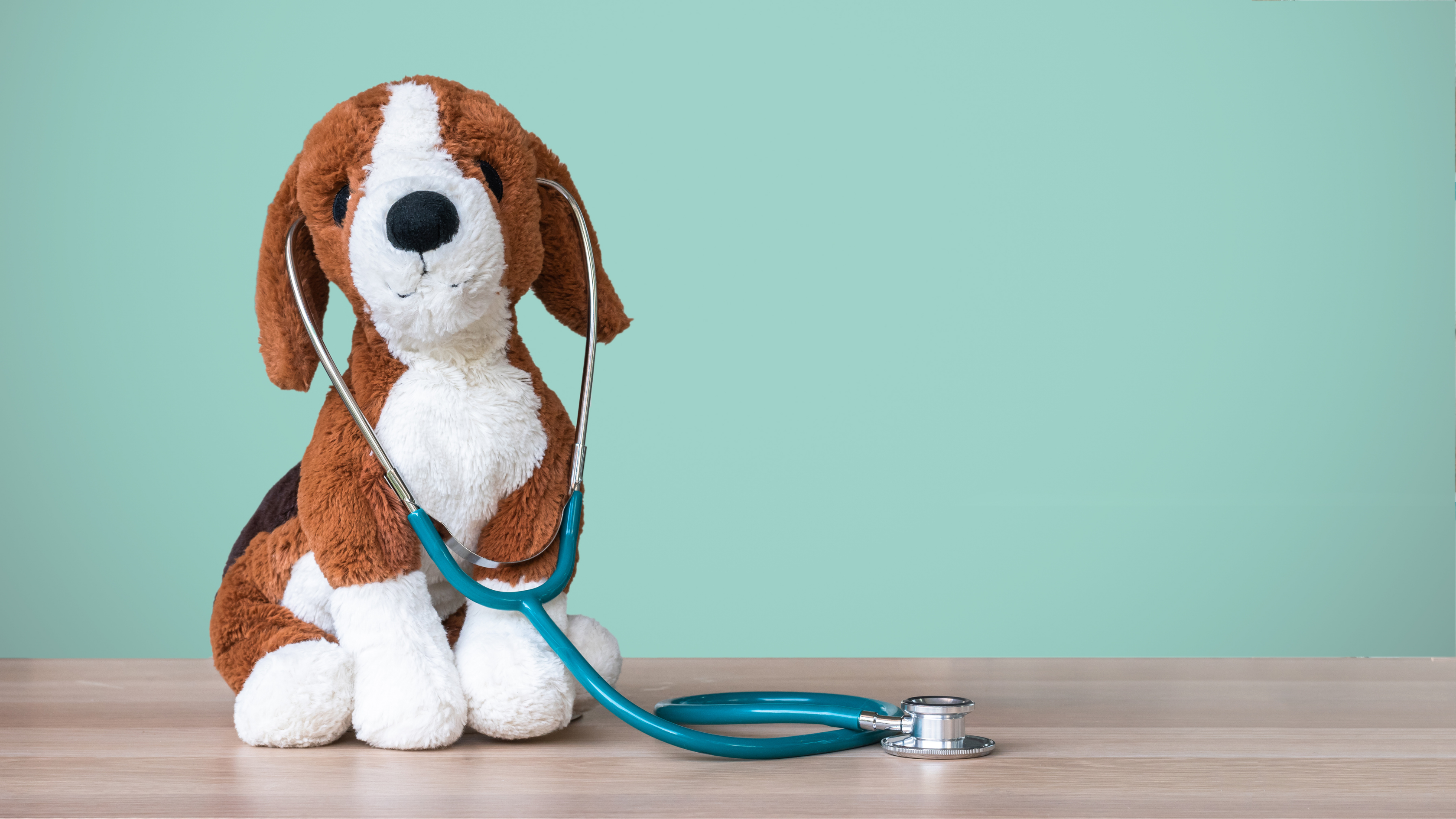dog stuffed animal with stethoscope